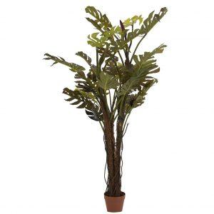Planta split philo