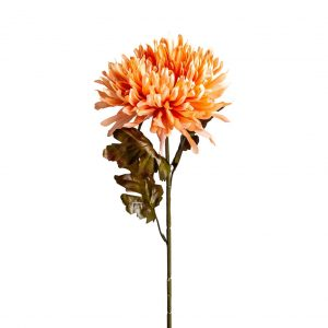 Flor crisantema
