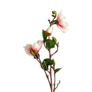 Flor yulan