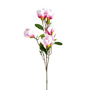 Flor magnolia