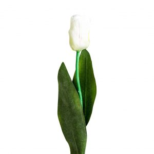 Flor tulipan