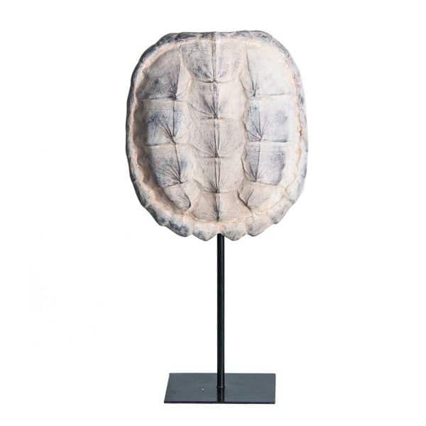 Escultura caparazón tortuga