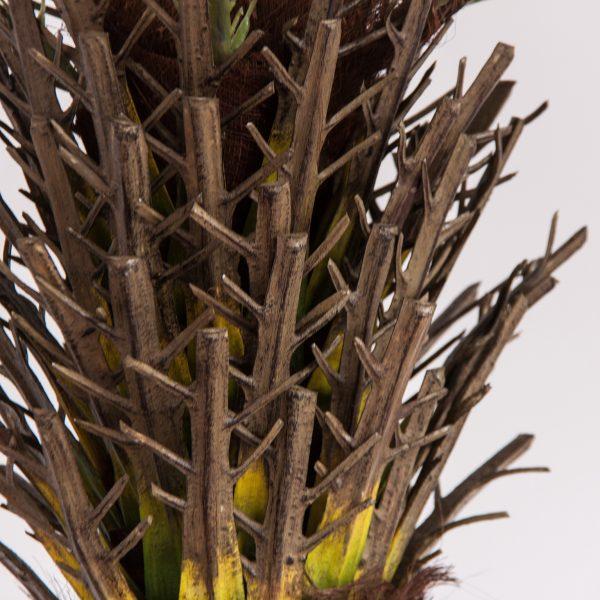 Planta palmera