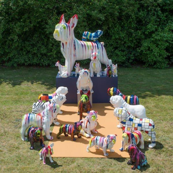 Bulldog ingles multicolor