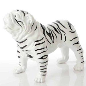Bulldog americano zebra