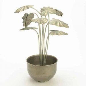 Decor maceta flor alocasia pm