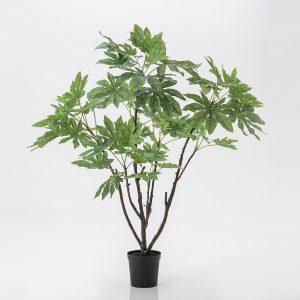 Fatsia japonica mac