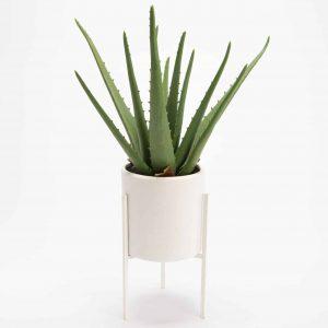 Cactus s/pied deco