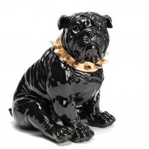 Bull noir collier dore assis
